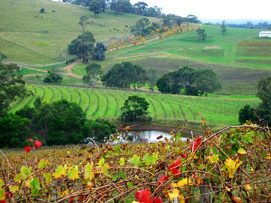vineyards in Hunter Valley, north of Sydney