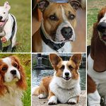 5 best dogs for first-time owners