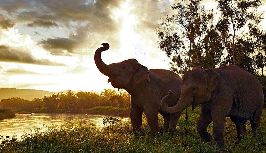 elephants at Camp Dara