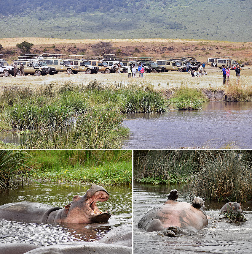 scenes at the Hippo Pool