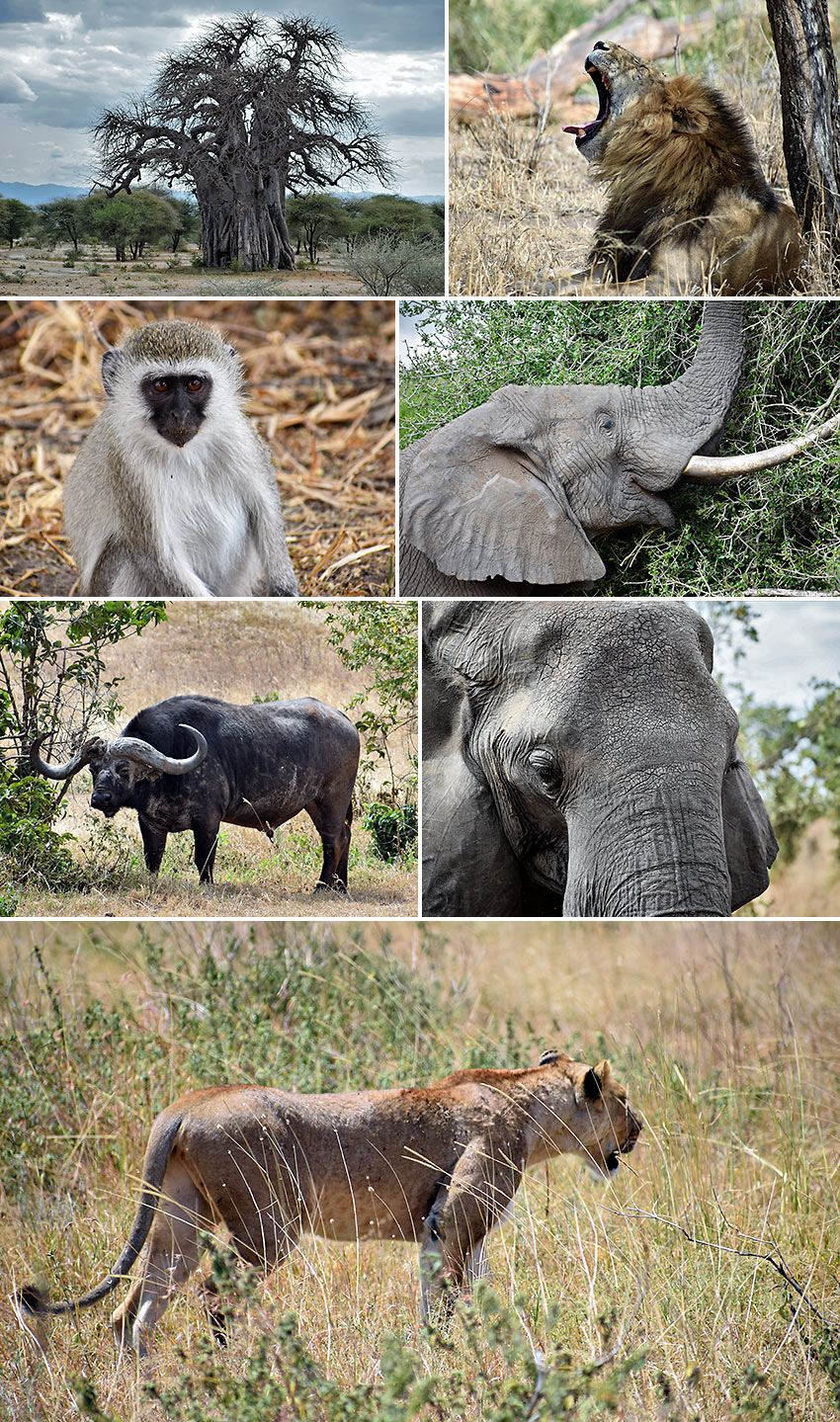 wildlife at Tarangire National Park
