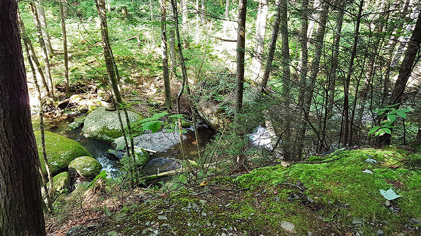 view along intermediate hike