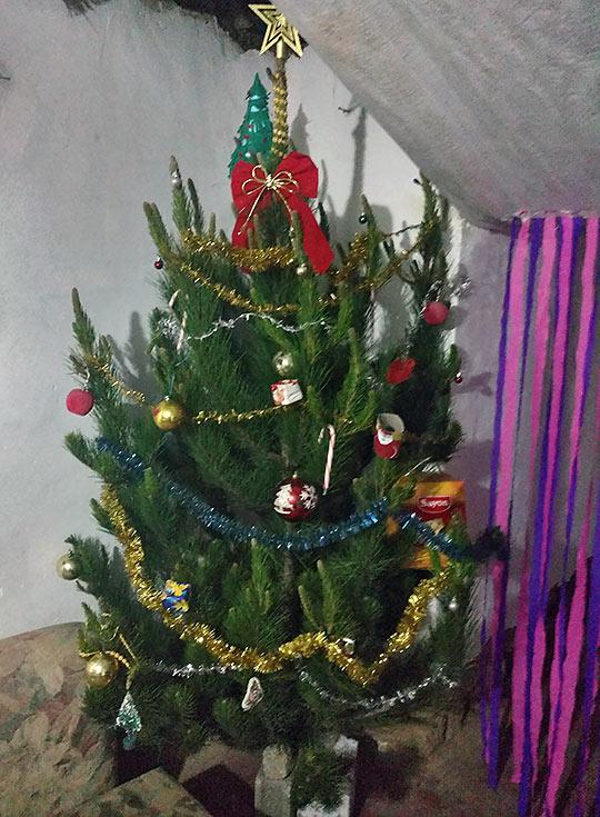 host family's Christmas tree
