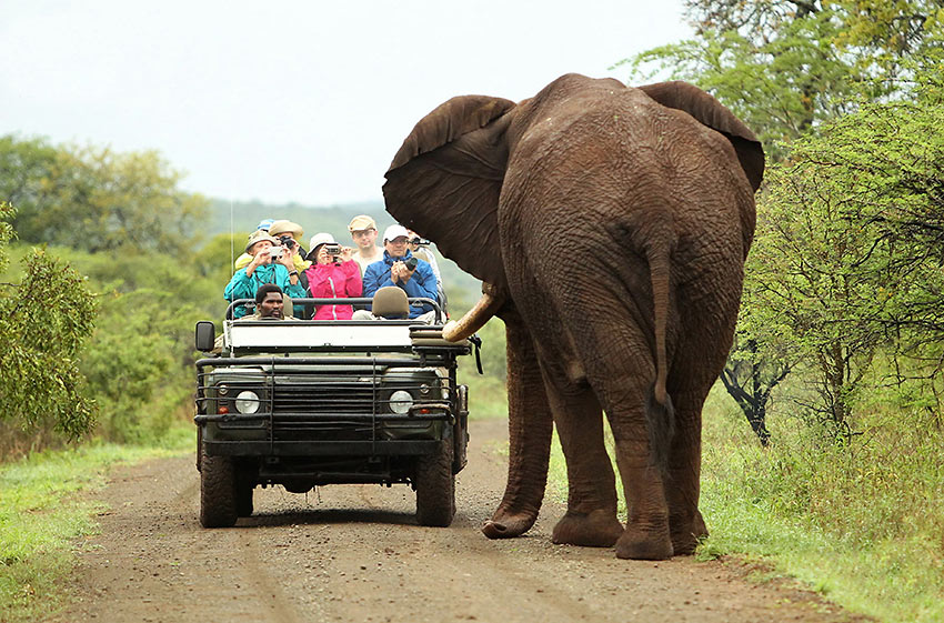 tourists encounter an elephant