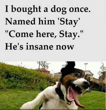 insane dog