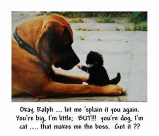 Parting Shot: Cat and Dog