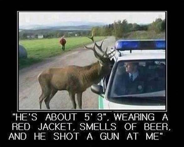 Parting Shot: Deer to Driver