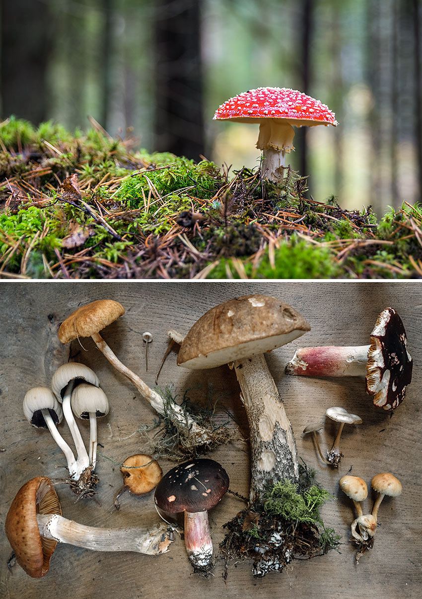 health foods: different kinds of mushroom