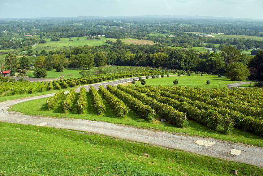 aerial view of Bluemont Vineyard with Loudoun Valley in the back ground
