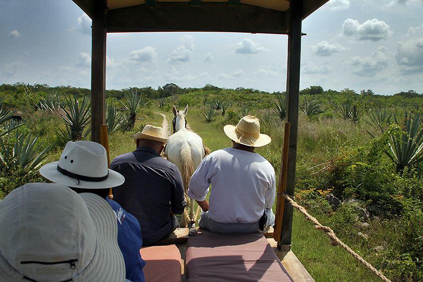 trekking to the agave fields at Sotuta de Peon Hacienda