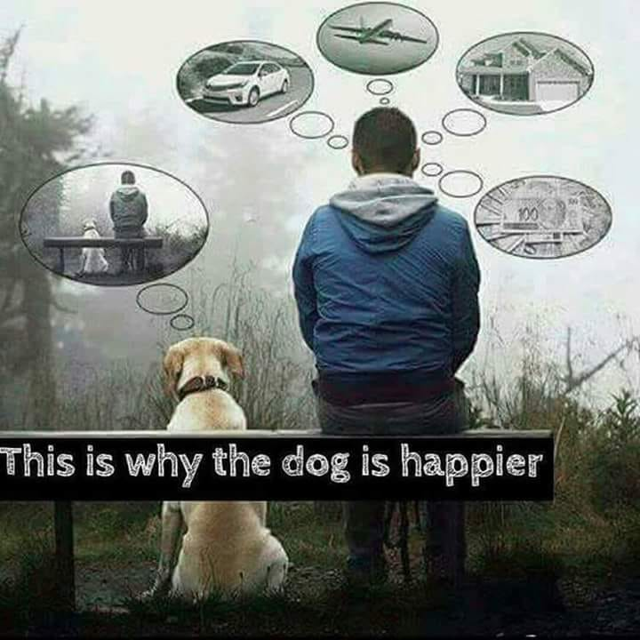 Good Thoughts: Why the dog is happier