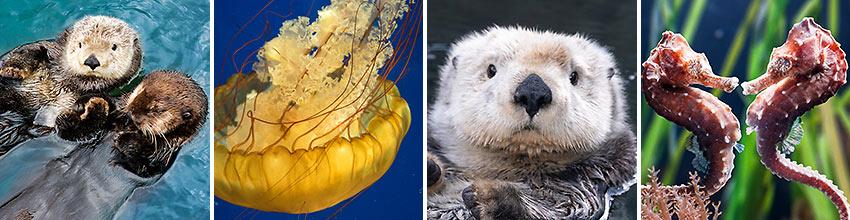 Wildlife at the Vancouver Aquarium