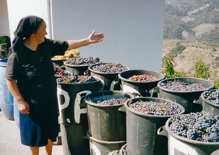 lady show casing her freshly picked grapes, Northern Portugal