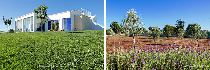 writer's home and olive grove at Valle d'Itria, Upper Salento, Puglia