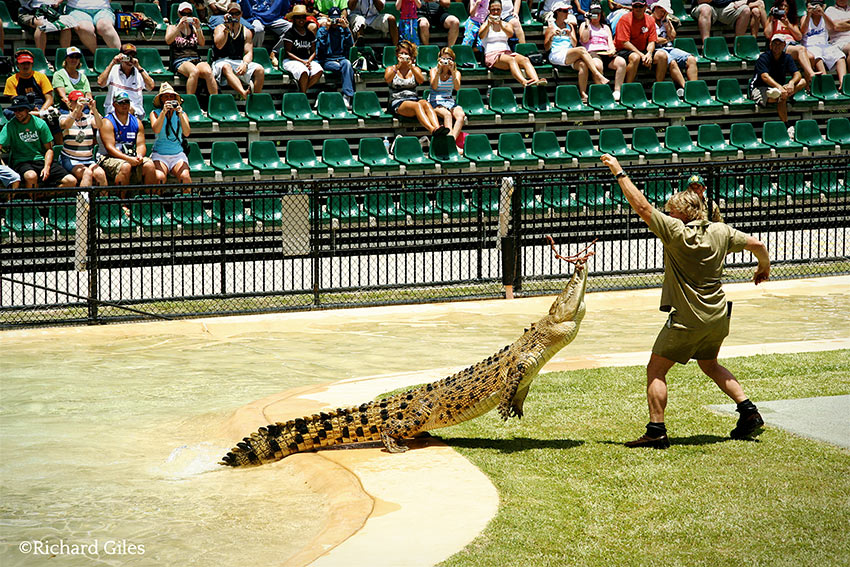 Steve Irwin feeding a crocodile at the Australia Zoo, December 27, 2005