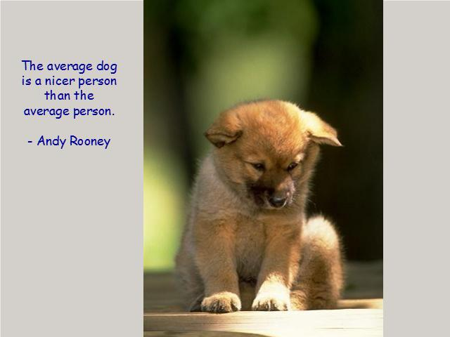 Heavy Thought of the Week: Average Dog