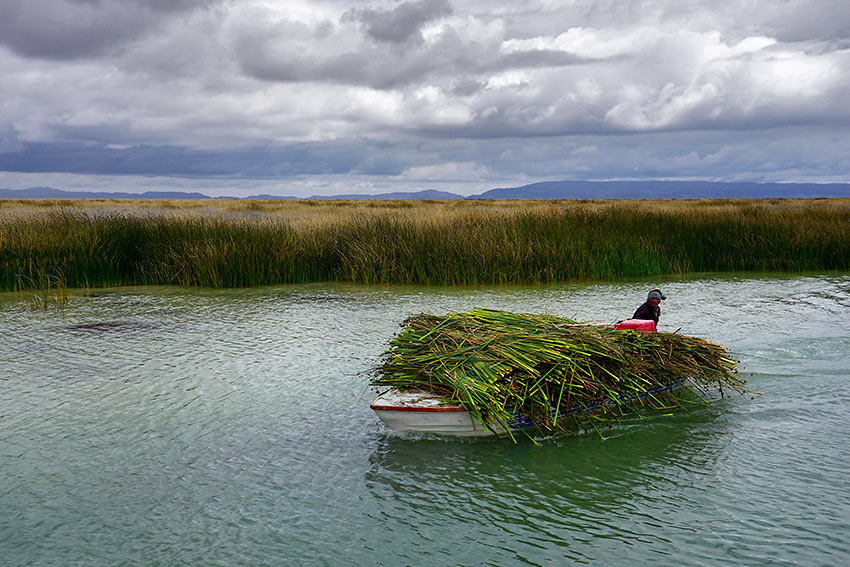 boat carrying reeds for island homes, Lake Titicaca, Peru