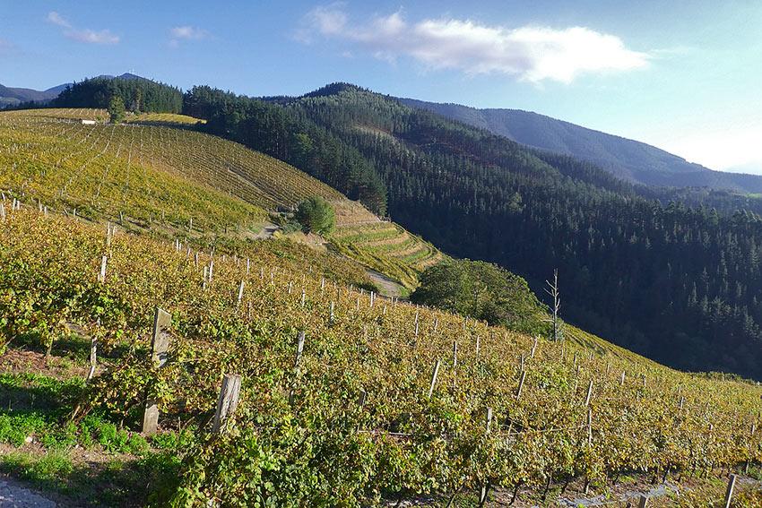 Bodega Berroja vineyard