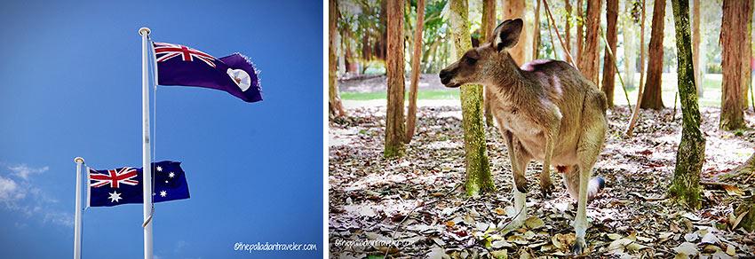 Australian flags and kangaroo