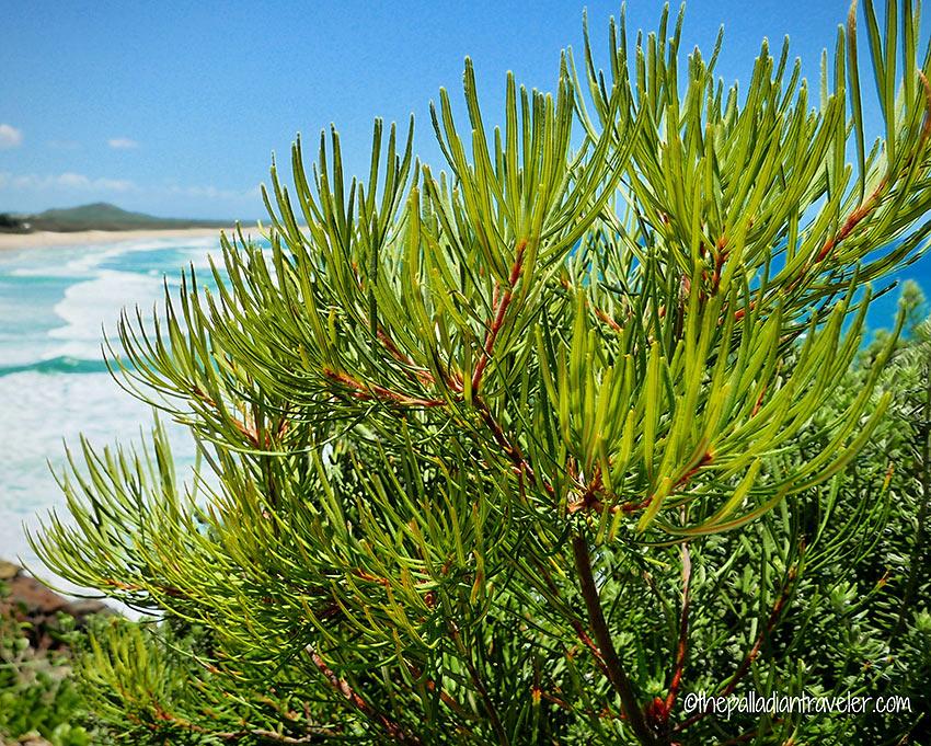 beach foliage, Coastal Pathway