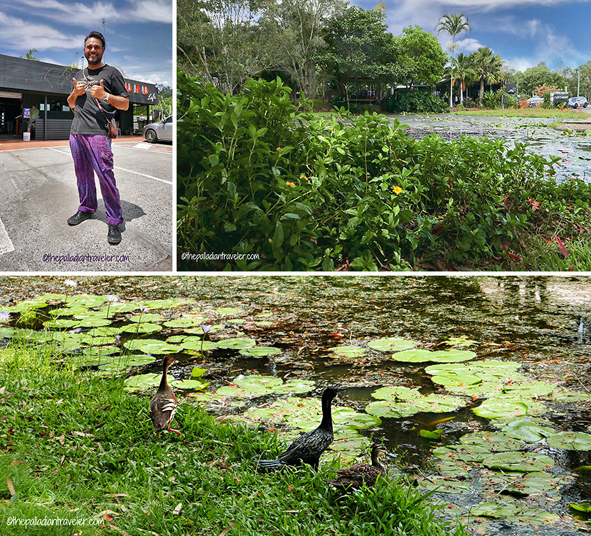 Jonny Bundellu and lily pad-filled duck pond surrounding the Guru Life