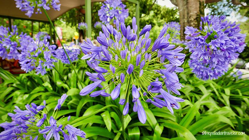 flowers at a garden in Montville