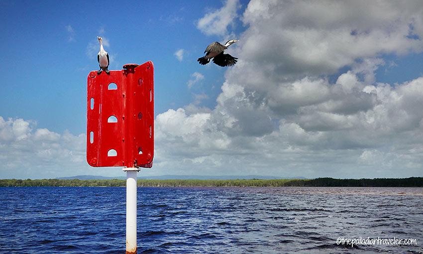 two inhabitants of the Noosa Everglades