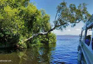 pontoon boat and glides deep into the Noosa Everglades