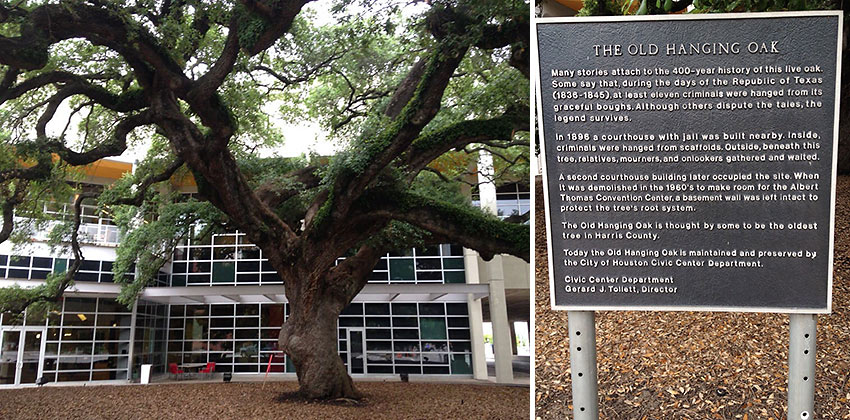 The Old Hanging Oak and memorial, Houston