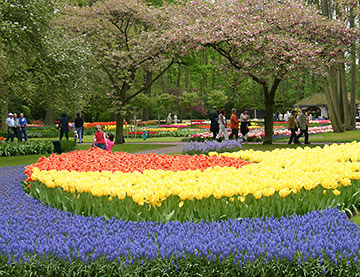 tulips at Keukenhof