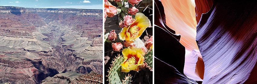 scenes from Northern Arizona