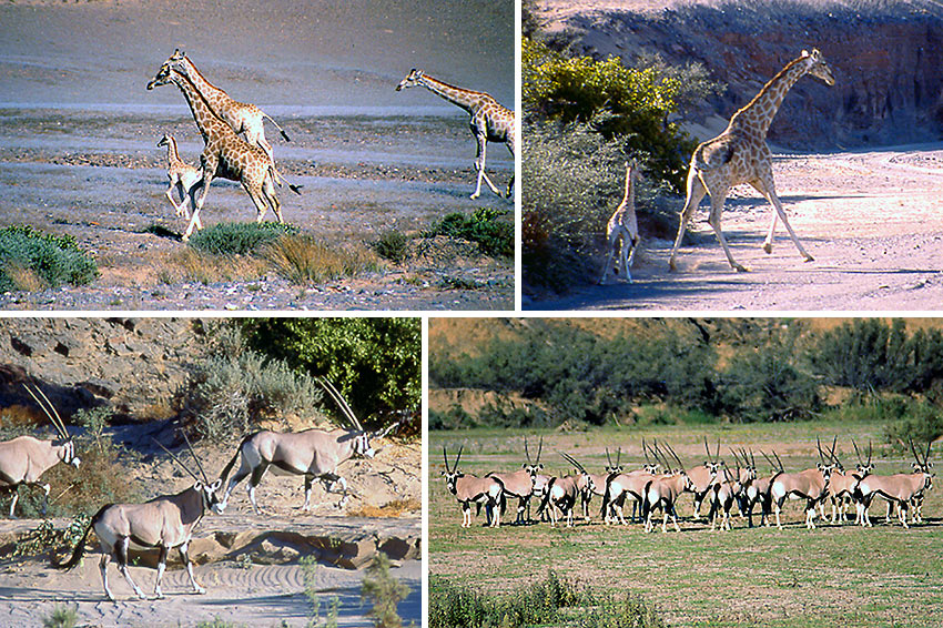wildlife at the Skeleton Coast