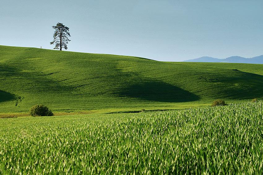 The Palouse, Washington State