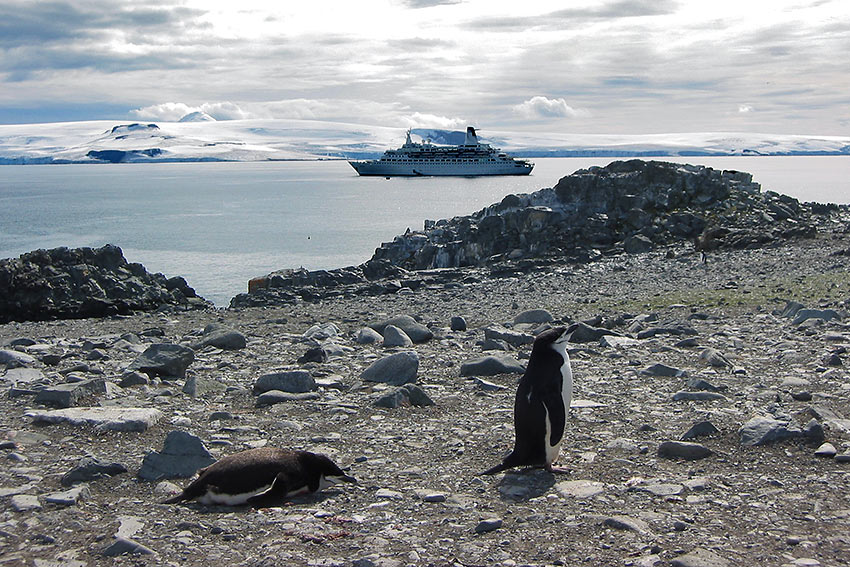 penguins on MV Discovery Antarctica tour