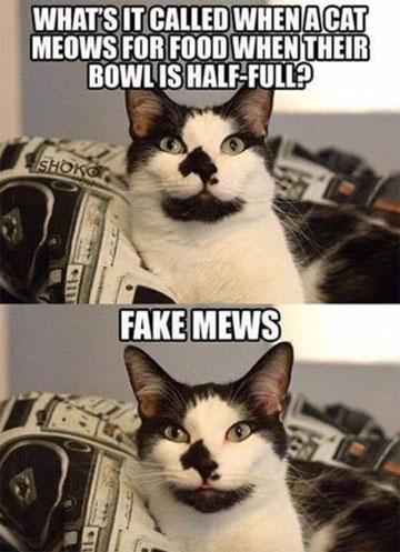 Rodney's Puns: Fake Mews