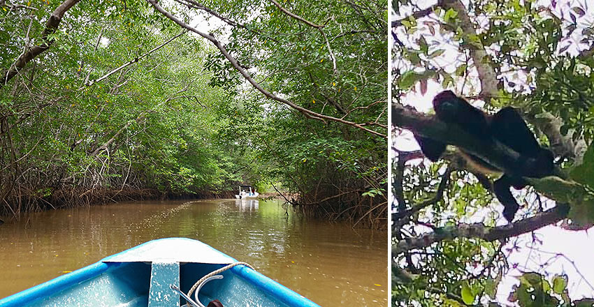 mangrove swamp and howler monkey on a Conchita Jungle Tour