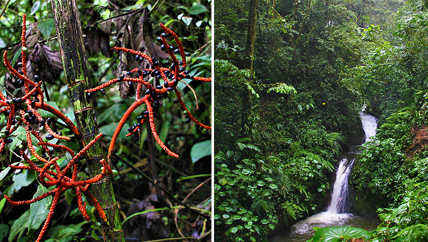 the cloud forest at Monteverde