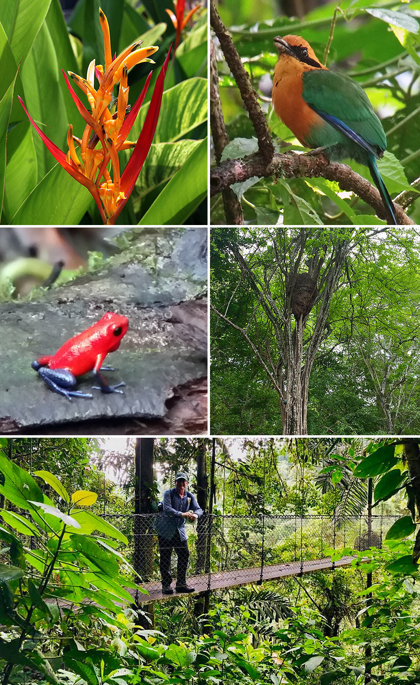Costa Rica rainforest fauna, flora and a hanging bridge