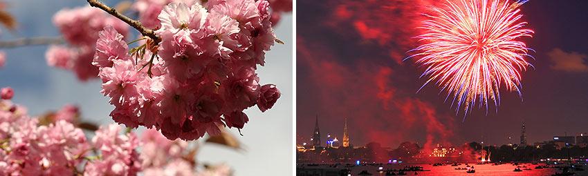 Cherry Blossom Festival in Hamburg