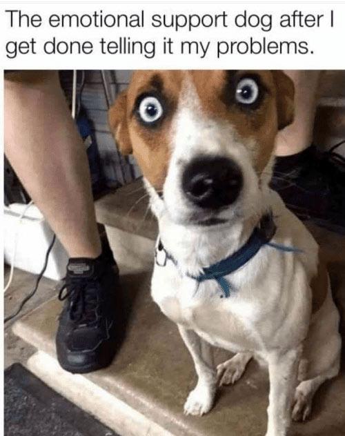 Parting Shots: Emotional-Support-Dog