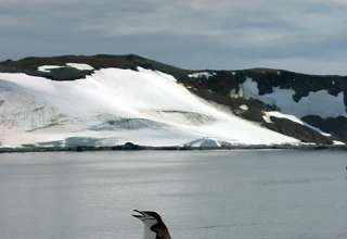 Antarctic penguin