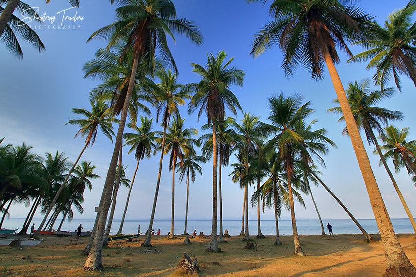 coconut palms at a beach in San Fernando, Ticao Island