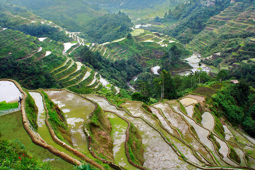 rice terraces in the town proper of Banaue, Ifugao