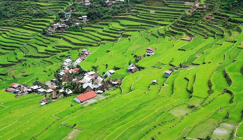 rice terraces in Batad village, Banaue, Ifugao