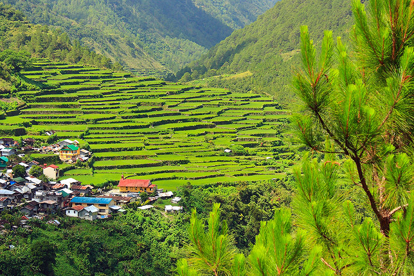the Bay-yo Rice Terraces near the road going to Bontoc, Mountain Province
