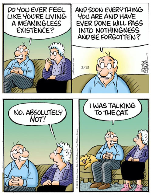 Parting Shots: Cat Existence