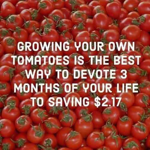 Parting Shots: Growing Tomatoes