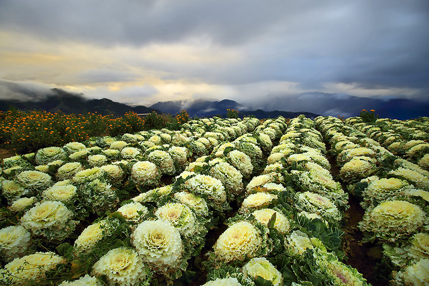 sunrise at the Northern Blossom Flower Farm, Atok, Benguet