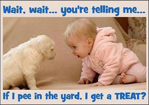Parting Shots: Pee in the Yard