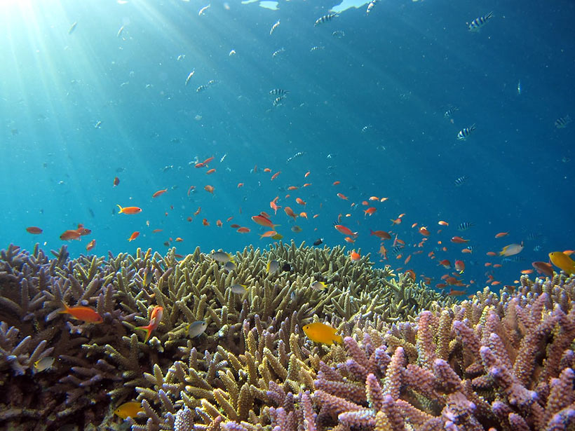 corals and other marine life